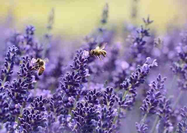 Der Kampf gegen synthetische Pestizide