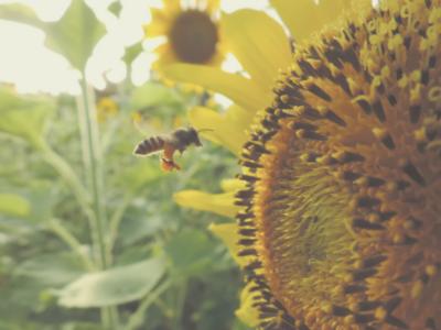 """Tak for en million underskrifter: Borgerinitiativet """"Save the bees and Farmers"""" (Red Bierne og Landmændene) indsamler nok underskrifter til deres sag!"""
